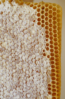 Greek Honey - Bee Honeycomb