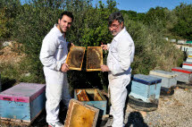 Greek Honey - Bee Hives